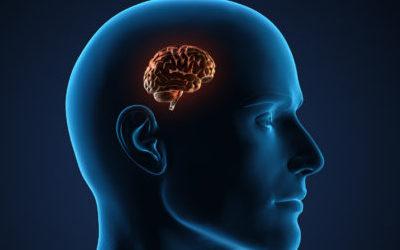 Anti-Mythe #2 : Nous n'utilisons que 10% de notre cerveau