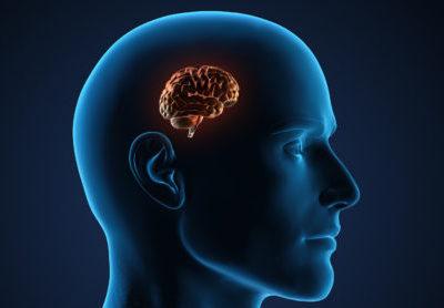 Modélisation du cerveau